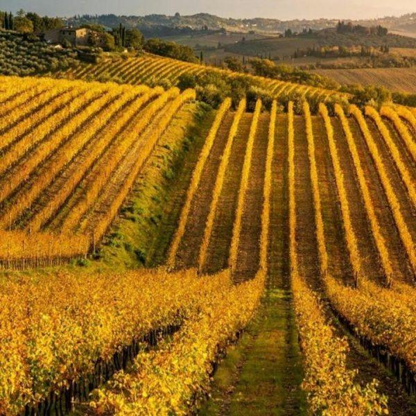 Vini DOCG Toscana